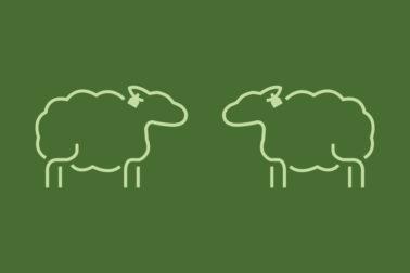 Illustrasjon: Lamm kit